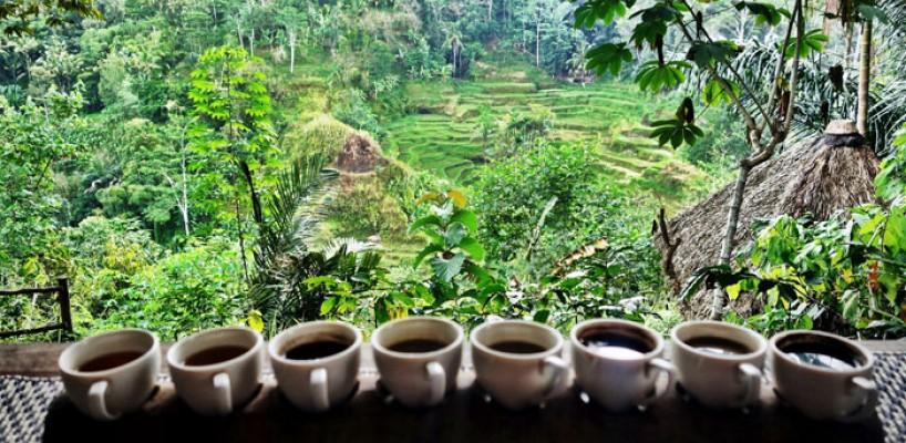 Ce nu stiai despre cafeaua Bali