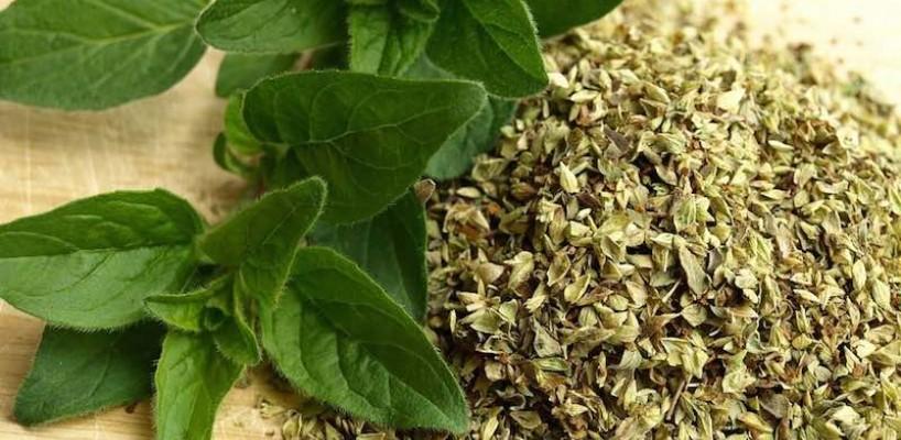 Ceai de oregano - beneficii si preparare
