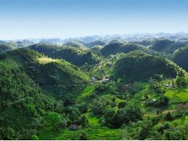Cafea Blue Mountain Jamaica