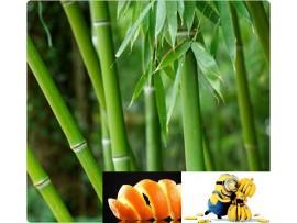 Ceai de plante Bamboo Orange
