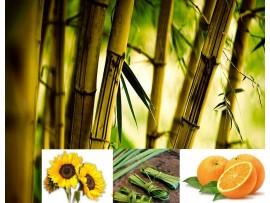 Ceai de plante Budha Bamboo
