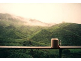 Cafea Indonezia Sumatra Mandheling Organica