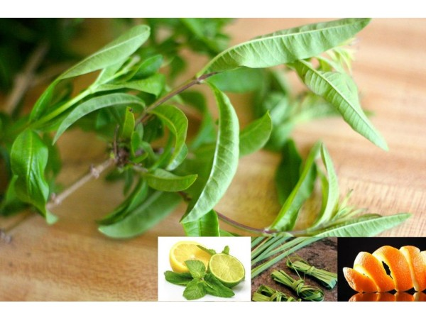 Ceai de plante John Lemon