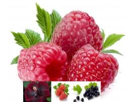 Ceai de fructe La Zmeuris