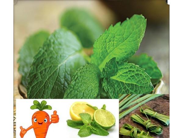 Ceai de plante Lemon peppermint
