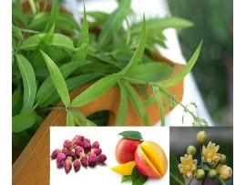 Ceai de plante Mangulan