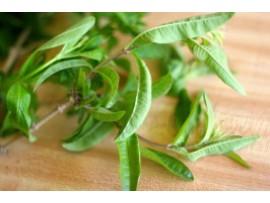 Ceai de plante Verbena