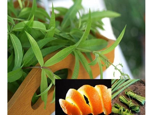 Ceai de plante Paula-s herbs