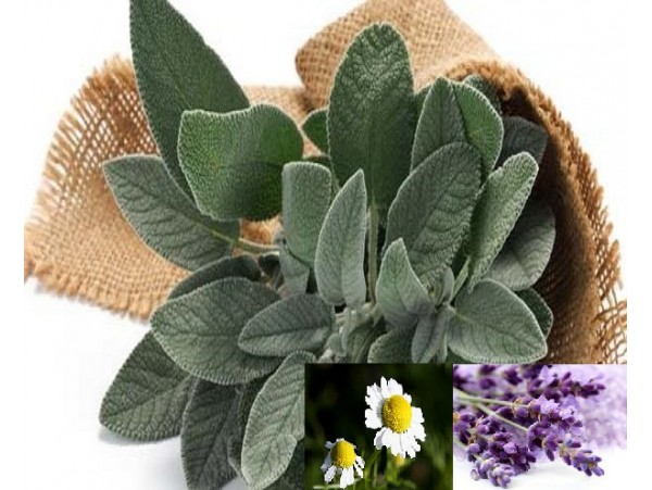 Ceai de plante Evening Herbal Mix