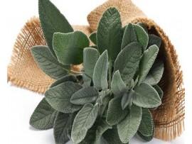 Ceai de plante Salvie
