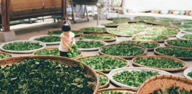 10 beneficii uimitoare ale ceaiului. De ce sa incepi sa‐l consumi chiar de azi